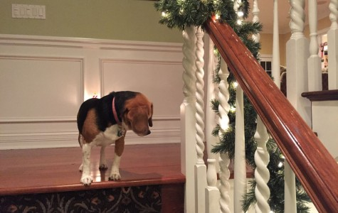 Kate Chuma, senior, captures a photo of her dog, Bailey, enjoying the Christmas spirit.