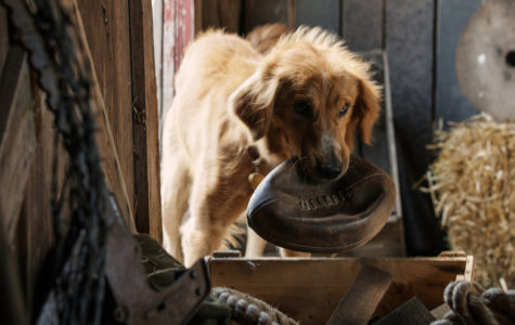 'A Dog's Purpose' Proved Positive Film